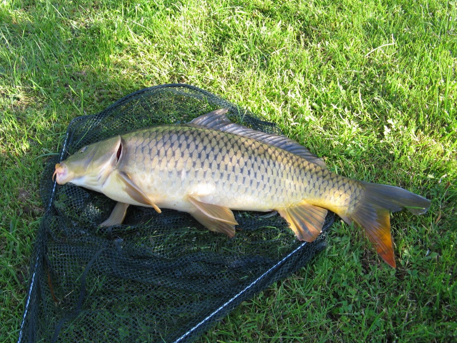 Рыбалка в Белореченском районе